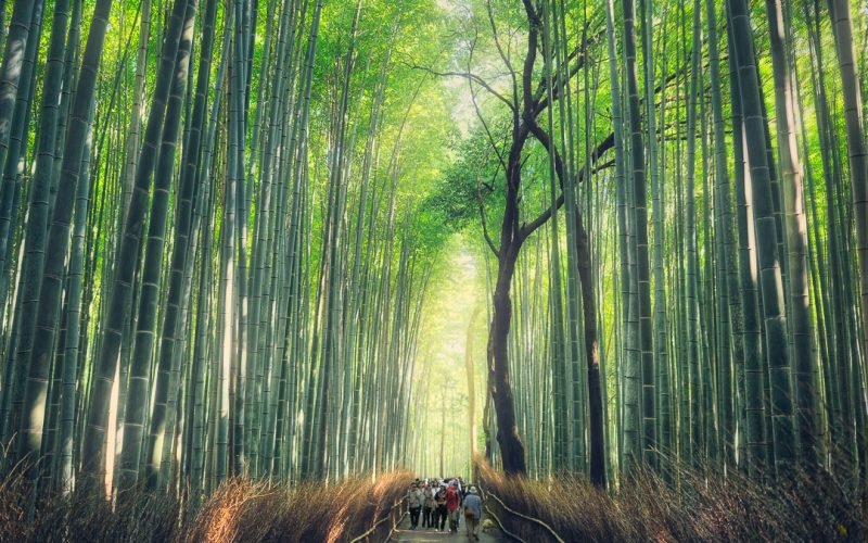 Bamboo Forest Arashiyama District Kyoto